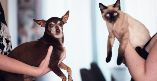 Entenda por que é tão importante castrar cachorros e gatos