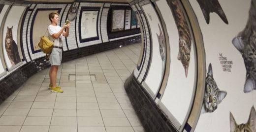 Ação troca anúncios em metrô de Londres por fotos de gatos