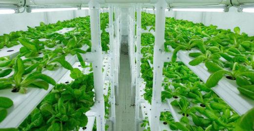 Contêiner produz alimentos frescos utilizando pouca água