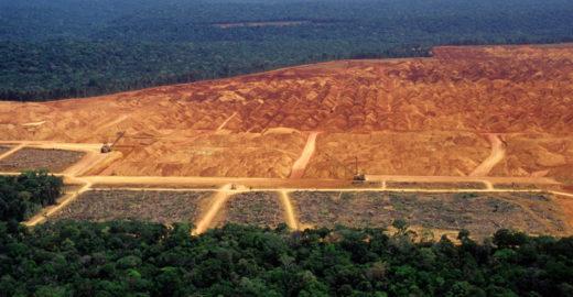 Amazônia perde o equivalente a 6 cidades de SP em 30 anos