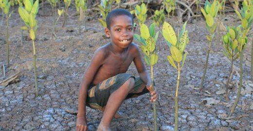 Projeto planta uma árvore a cada vídeo visualizado