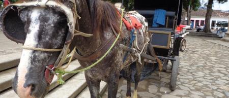 Fim de animais em carroças? Crie e apoie petições pelo Brasil