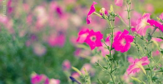 """""""Flores para quando tu chegares"""""""