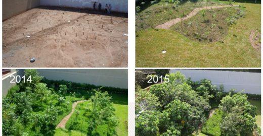 """Botânico resgata Mata Atlântica com """"florestas de bolso"""""""