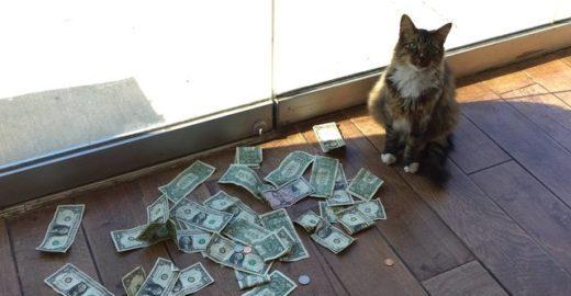Gato gatuno gosta de 'roubar' dólares e dono dá tudo à caridade