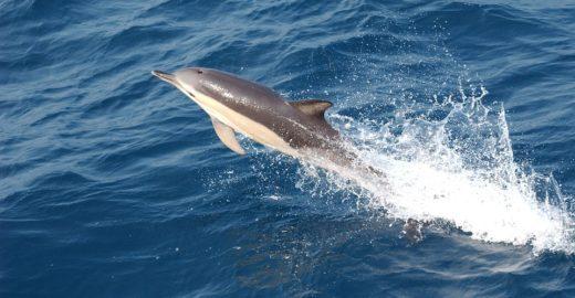 Golfinho é sacrificado após engolir balão e sacos plásticos