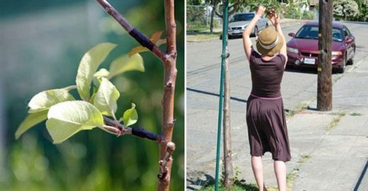 Grupo dos Estados Unidos planta árvores frutíferas secretamente