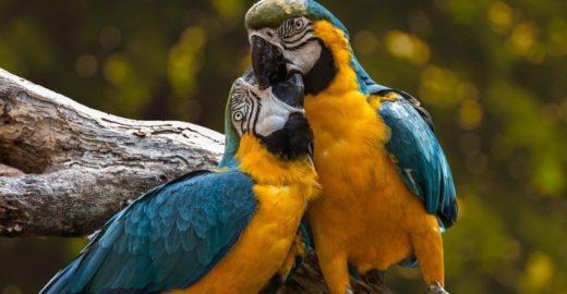Ibama fechará dois centros de recebimento de animais silvestres