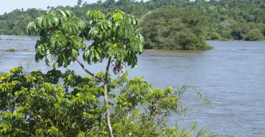 Campanha tenta plantar 100 árvores nativas em SP há meses