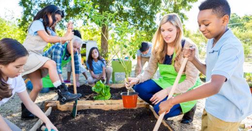 Por que ter uma horta na escola melhora o desempenho dos alunos ?