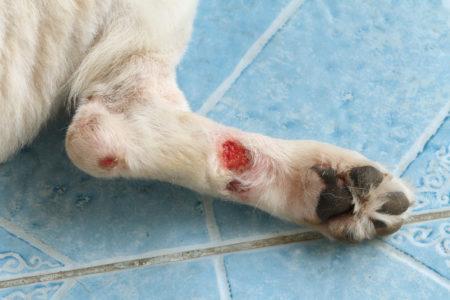 Chronic wound on a dog leg