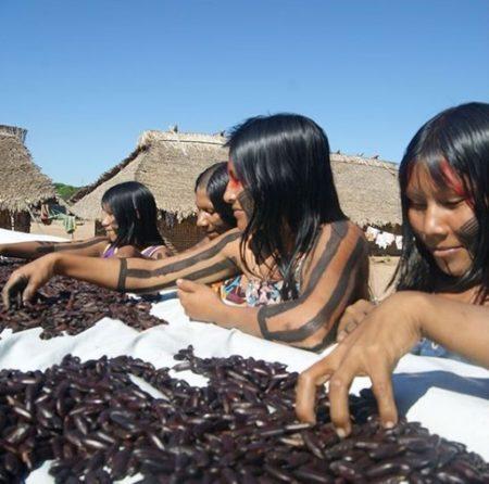 mulheres indígenas produtoras