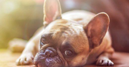 Sequestros de cachorros aumentam 110% em São Paulo