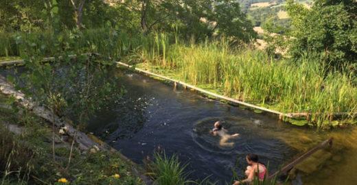 Saiba mais sobre as piscinas que usam plantas no lugar de cloro