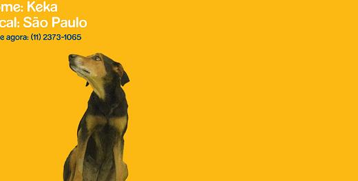 Protetor de tela ajuda cães abandonados a encontrar um dono