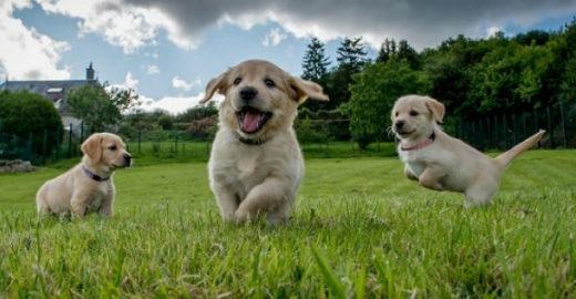 Aplicativo israelense ajuda cães e donos a se socializar