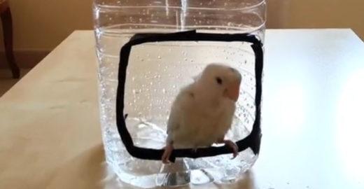 Aprenda a fazer um chuveiro para pássaros simples e barato