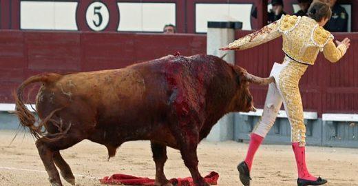 Toureiro francês leva chifrada no ânus em Madri; veja vídeo