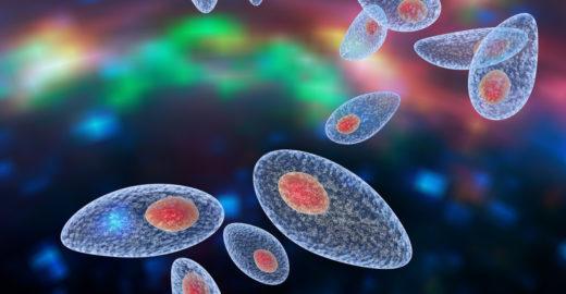São Paulo registra surtos de toxoplasmose; saiba como evitar