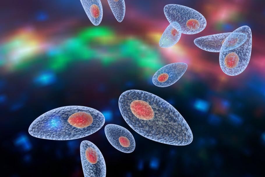 parasita visto em microscópio