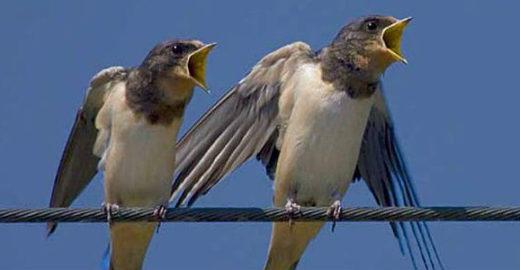 Software identifica espécies de animais pelos sons que emitem
