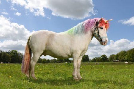 Cavalo pintado de unicórnio