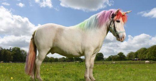 Evento fantasia cavalos para transformá-los em unicórnios