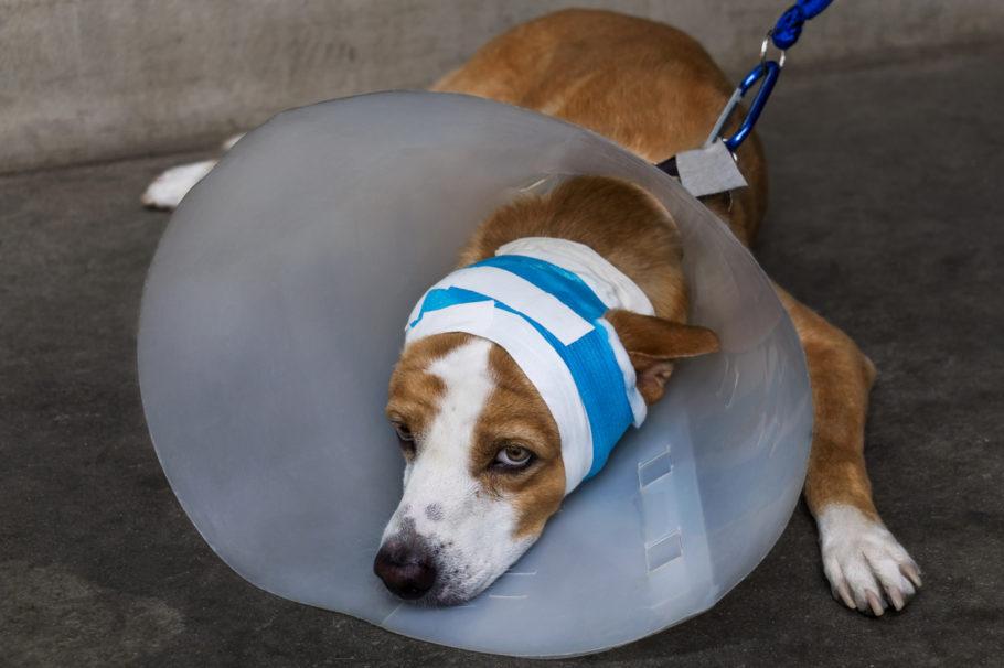 cachorro com um cone na cabeça