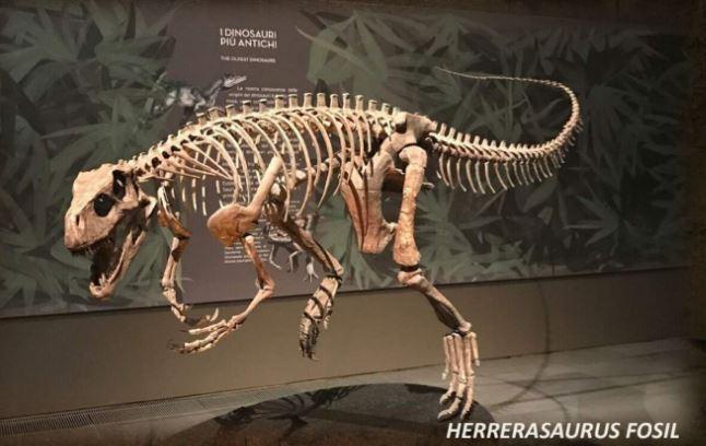Além dos dinossauros, exposição também oferece às crianças a oportunidade de se tornarem 'paleontólogos por um dia'
