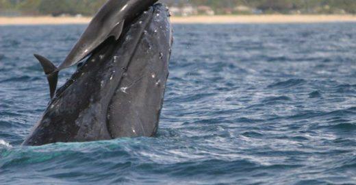 Canadá aprova lei que proíbe cativeiro de baleias e golfinhos