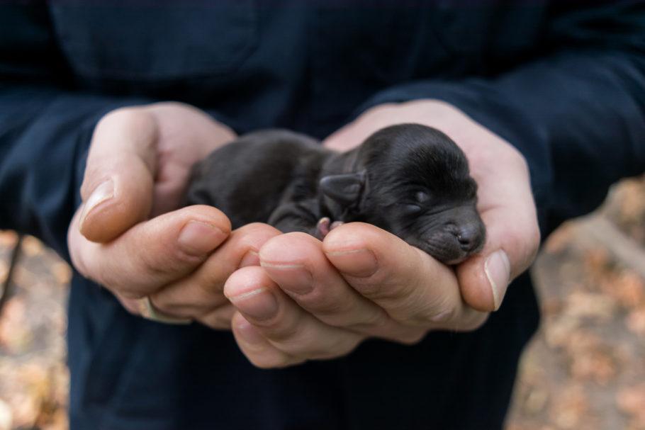 cachorrinho recém-nascido na mão de uma pessoa
