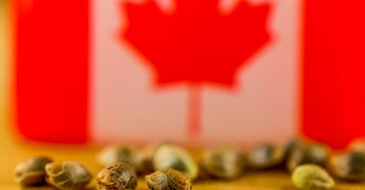 Canadá tem tours por fazendas e fábrica de maconha
