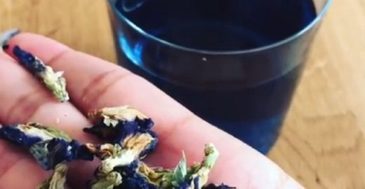 Bela Gil apresenta chá azul de poderosas propriedades medicinais