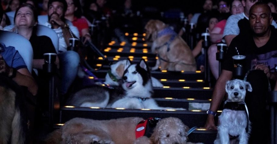sessão de cinema com cachorros