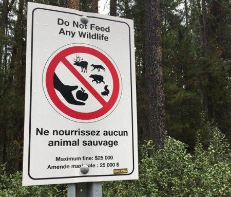 placa não alimente os animais