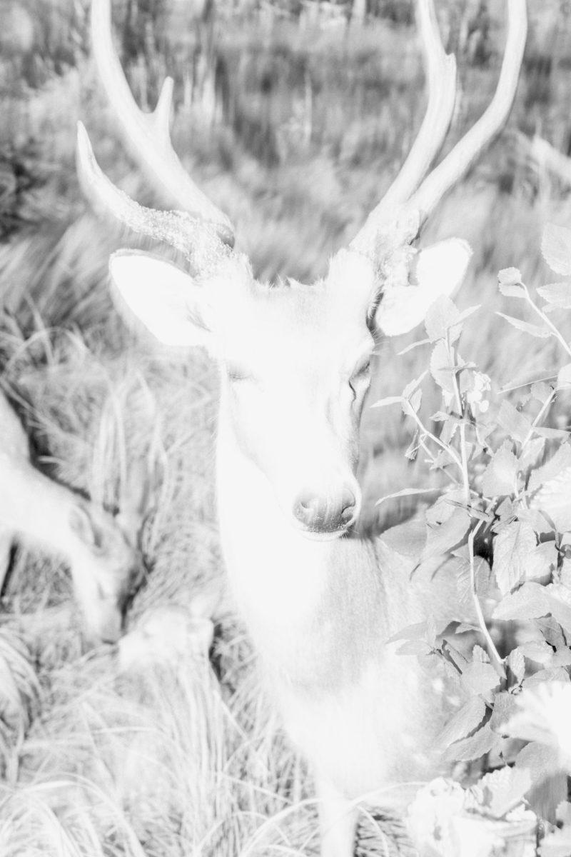 Sem nome, da série De Tiempo en Tiempo un Volcán Estalla, de Gihan Tubbeh, em cartaz na mostra fotográfica 'Ainda Há Noite', no Itaú Cultural