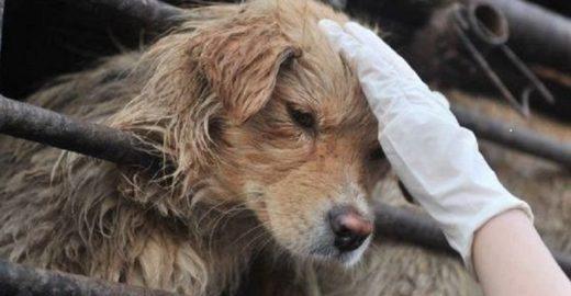 2,3 milhões de pessoas apoiam fim de festival de carne de cachorro