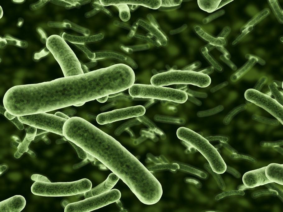 ilustração que mostra bactérias no microscópio
