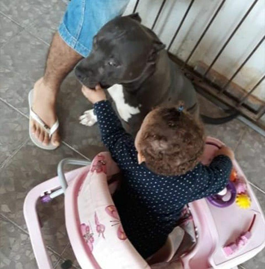 Cão convivia com a criança desde que ela nasceu