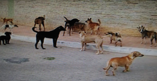 Prefeitura de Niterói recebe 182 mil assinaturas para abrigo a cães