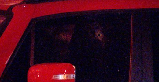 Câmera registra momento em que ladrão invade casa e mata mulher