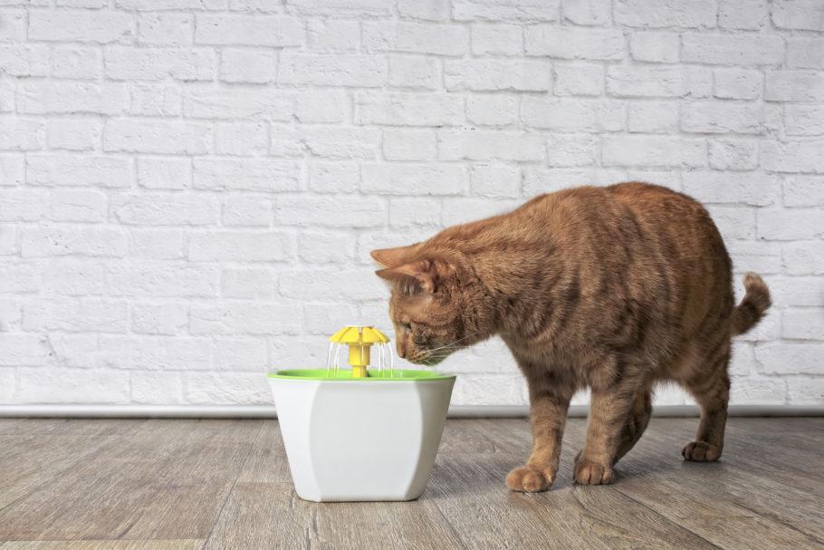 gato bebendo água na fonte elétrica