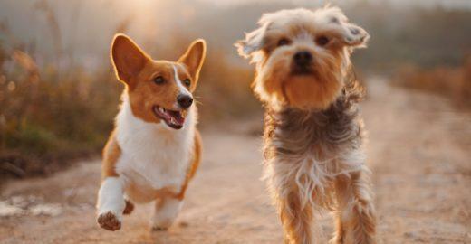 Pinheiros tem feira de adoção de cachorros e comida pets neste sábado