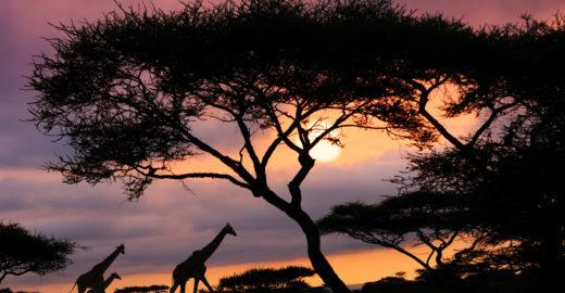 Conheça o parque que inspirou os cenários do filme 'Rei Leão'