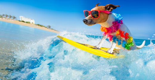 Empresa lança seguro viagem para pets; saiba como funciona