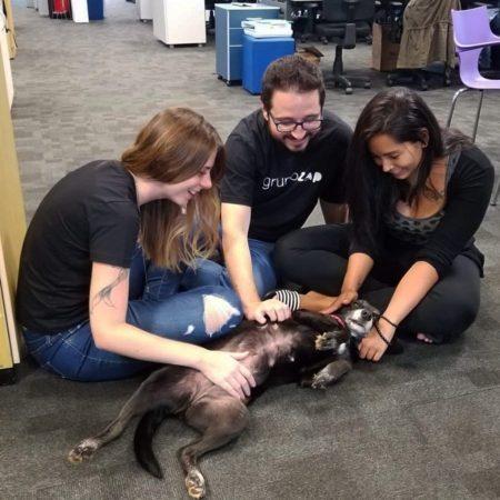 Os contratados para as vagas de tecnologia também vão trabalhar em um ambiente amigável aos pets