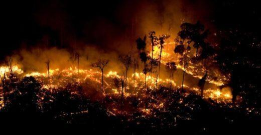 Petição em defesa da Amazônia cresce 776% em 24 horas