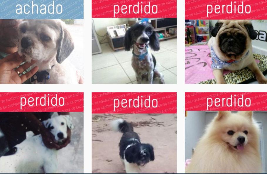 """foto de vários animais perdidos na página """"Procura-se Cachorro"""""""