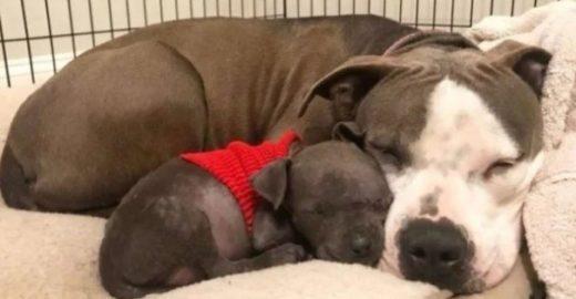 Cadela grávida perde filhotes e adota cãozinho órfão