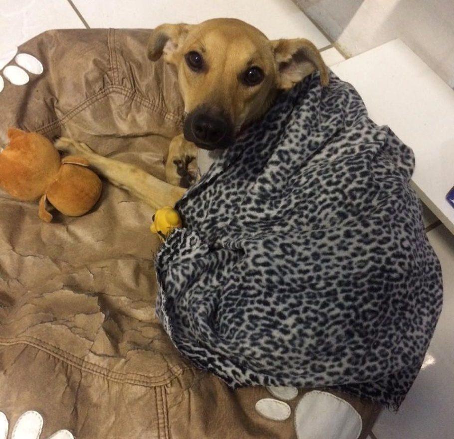 """""""Ei!"""", parece dizer esse bichinho resgatado entre a população de cães abandonados; """"Eu também sinto frio, fome e medo"""""""